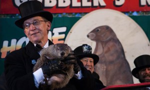 Punxsutawney Phil at Gobbler's Knob in Punxsutawney, Pa.